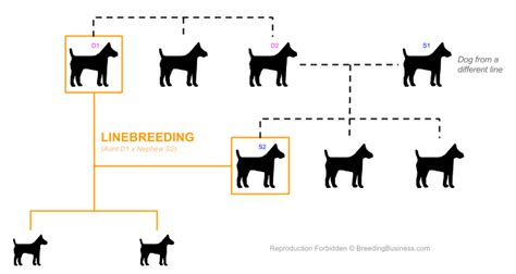 inbred dogs inbreeding definition what it means in