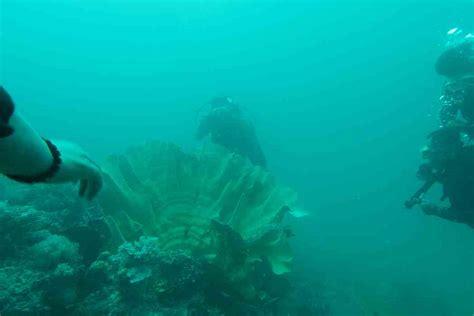 Kerang Laut beginilah nasib kima di takabonerate mongabay co id