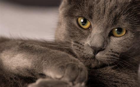 milye koty kartinki oboi na rabochiy stol skachat