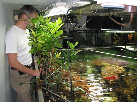 aquarium pond design biological pond filter diy biological free engine image