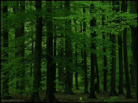 deep forest green pin deep green forest background on pinterest