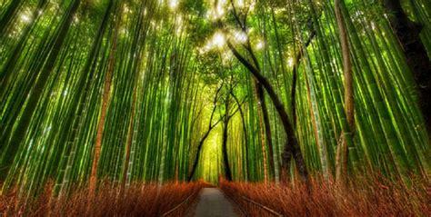 imagenes de paisajes naturales bosques imagenes de bosques imagenes de paisajes naturales hermosos