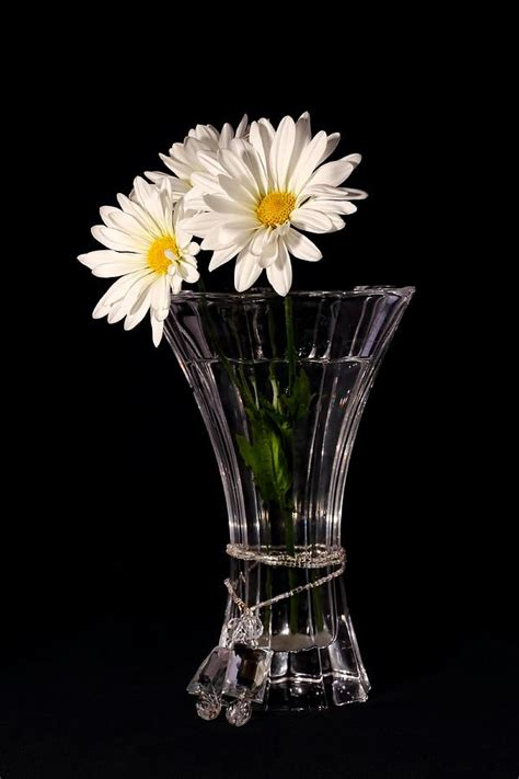 Daisies In A Vase by Daisies In Vase Photograph By Tracie Kaska