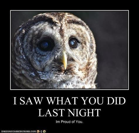 Owl Who Meme - 16 funny owl memes for fum and interesting articles feafum