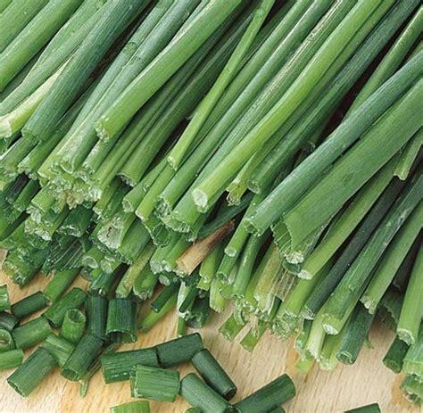 Jual Bibit Biji Bawang Daun benih garlic chives bawang kucai jual bibit bunga