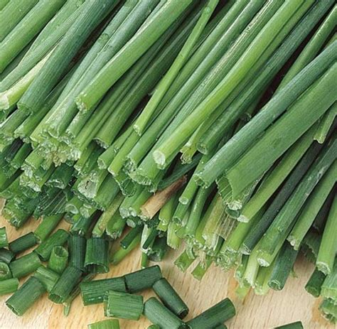 Jual Bibit Sayuran Daun Bawang benih garlic chives bawang kucai jual bibit bunga