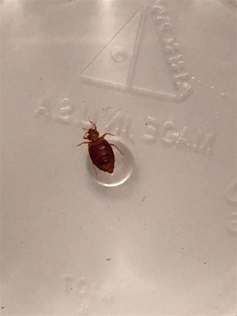 hotel bed bug registry bed bug registry chicago 28 images bigfoot pest