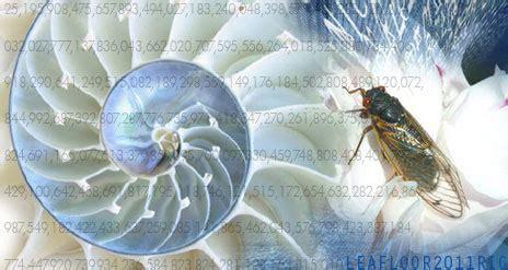 prime number pattern in nature nature s hidden prime number code