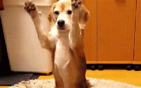gif puppy oie 14175751vzsqrlen