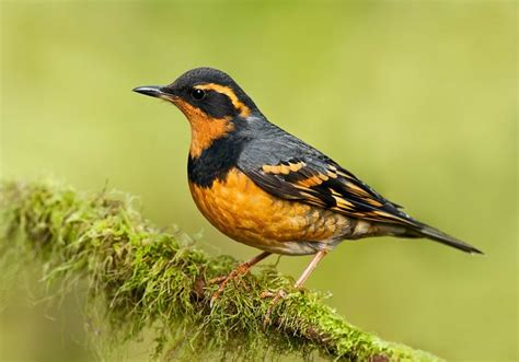 17 best images about the list of birds north america on
