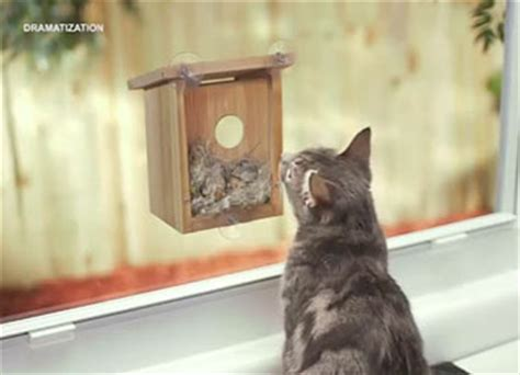 my spy birdhouse as seen on tv gradedreviews