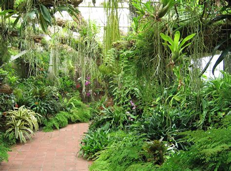 Tropical Garden Plants by Tropical Plant Conservatory