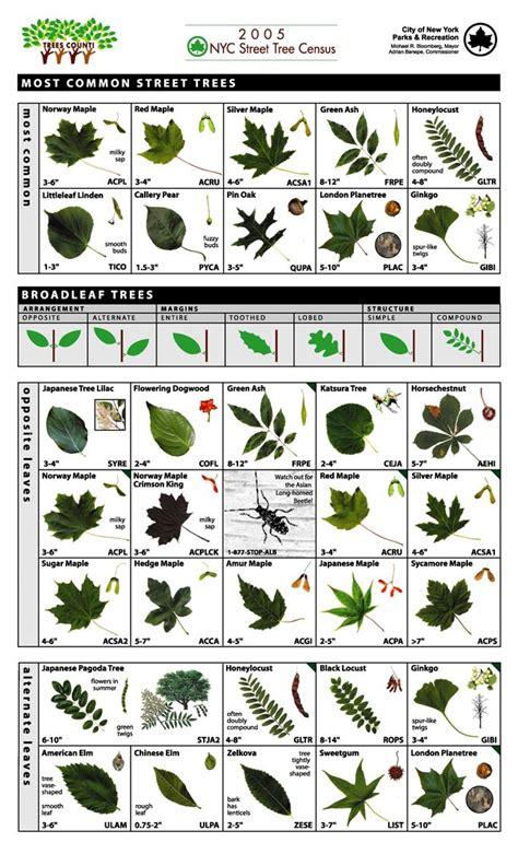 Key Food Garden City Ny Best 25 Tree Identification Ideas On Plant