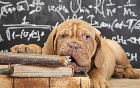 puppy school welcome to puppy school sandhole vets