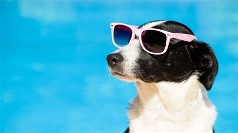 Vacation Pet Pet Pet Product by 5 Cool Summer Gadgets For Dogs
