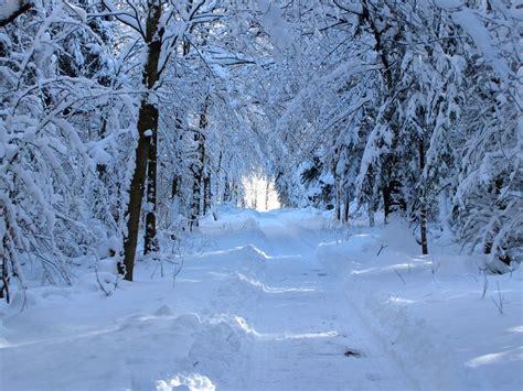 Mainan Salju Frozen Gel Magic Snow images gratuites arbre for 234 t chemin neige hiver