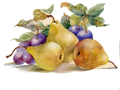 fruit o fresh pitura watercolor painting pears and plums stock illustration