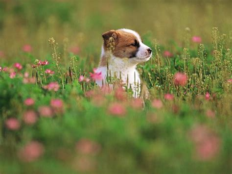 pretty puppy pretty in garden puppies wallpaper 13904302 fanpop