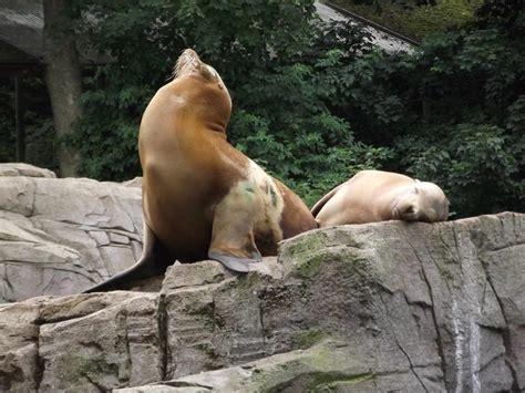 Zoologischer Garten Karlsruhe Eintritt by Forum 220 Bersicht 2013 2016 187 Zoo Karlsruhe