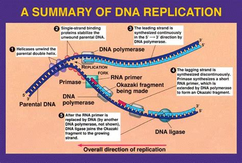 Stem Cell Dna Restructure Technology In Hinduism Ramani S Blog What Acts As The Template In Dna Replication