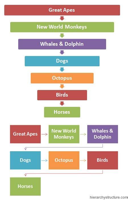 intelligence ranking animal intelligence hierarchy