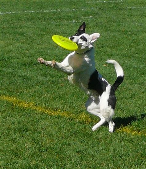 best frisbee best of the best best tricks for teaching your to play frisbee baxterboo