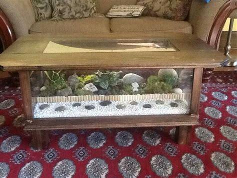 terrarium on coffee table coffee table terrarium tortoise care