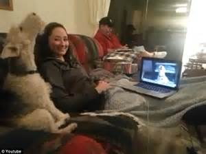 Sofa For Dogs Calling Dog The Adorable Moment Two Dogs Appear To Skype