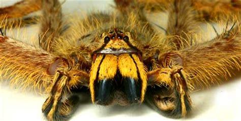 david bowie spinnen gestohlen