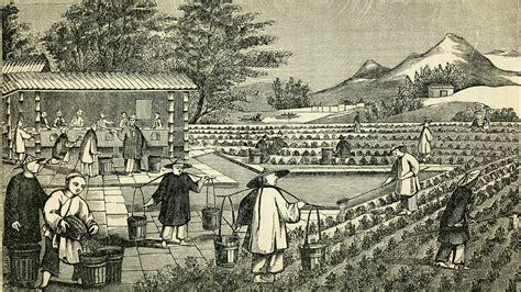 Tiny Home Design by Tea Tuesdays The Scottish Spy Who Stole China S Tea