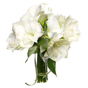 mazzo di fiori bianchi mazzo di amarillis bianchi consegna fiori a domicilio