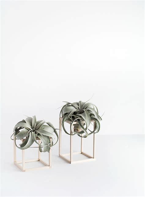 diy air plant holder diy mini plant stands