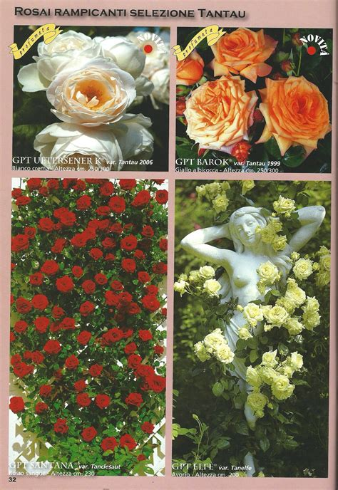 catalogo fiori e piante catalogo ricanti vivaio roggeri