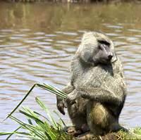 World Animal Animals Endangered