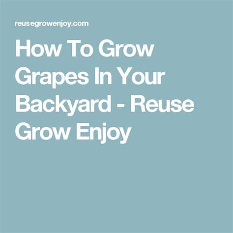 1314 best grape planting pot images on pinterest vines