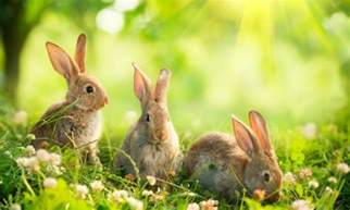 White Flowered Perennials - how to keep rabbits out of your garden smart tips