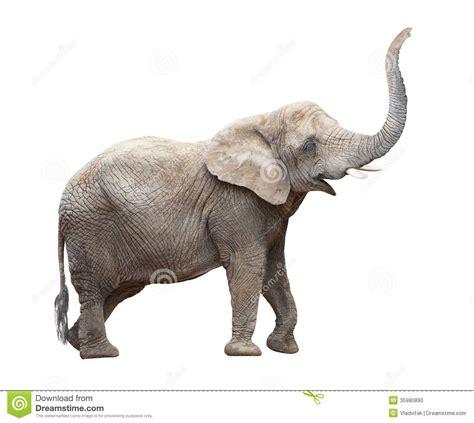 African Elephant. Stock Photo - Image: 35980890