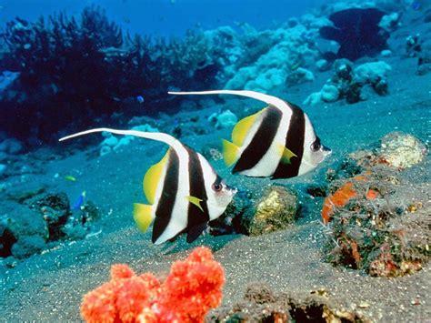 imagenes animales acuaticos animales acuaticos