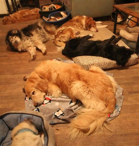 senior sanctuary these senior dogs had nowhere else to live but this country home gave them a second