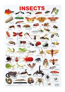 buy dreamland insects chart india kheliya toys