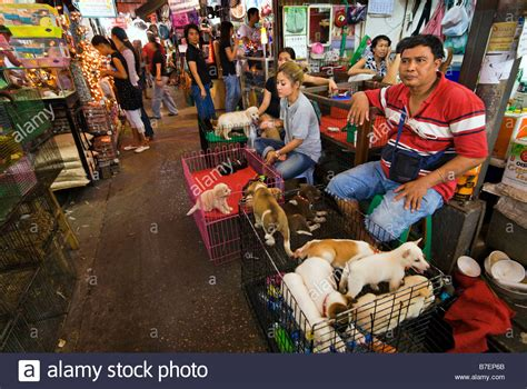 where to sell a puppy selling pet puppies at chatuchak weekend market in bangkok stock photo royalty
