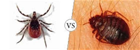 ticks vs bed bugs bed bug vs tick