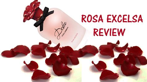 dolce gabbana perfume 2016 latest rosa excelsa rose feminine womens perfume collection 2016 rosa excelsa by dolce gabbana