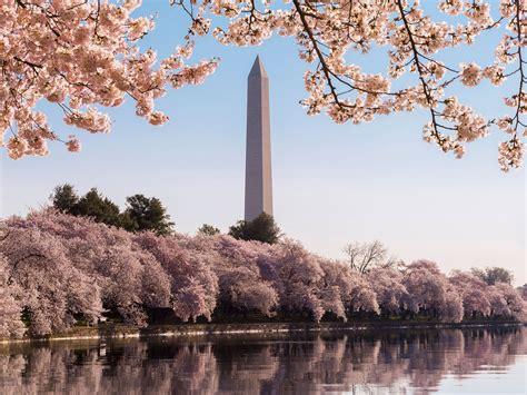 cherry blossom festival dc celebrate d c s cherry blossom festival at these hotels cond 233 nast traveler