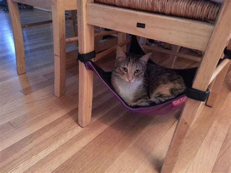 Chair Cat Hammock by Cat Crib Cat Hammock The Best Bed For Your Kitties To