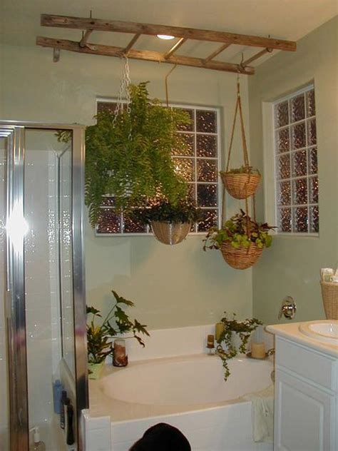 bathroom hanging plants 301 moved permanently