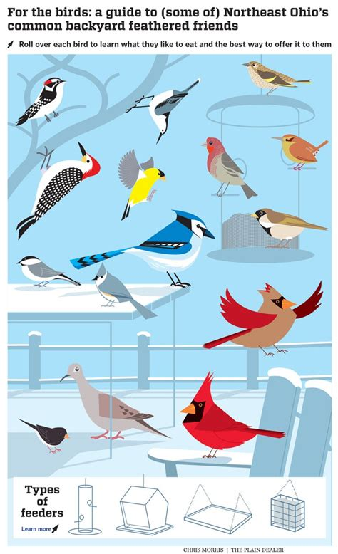 kinds of birds in your backyard kinds of birds in your backyard best 20 backyard birds