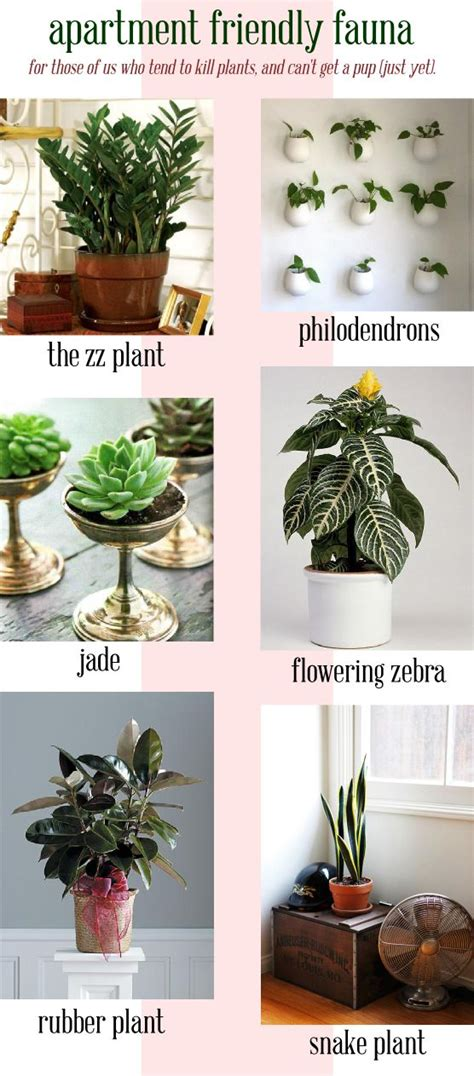 apartment plants apartment friendly plant options for those of us mainly