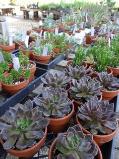 1000 images about simply succulents on