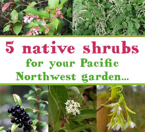 five pacific northwest native shrubs to plant in your